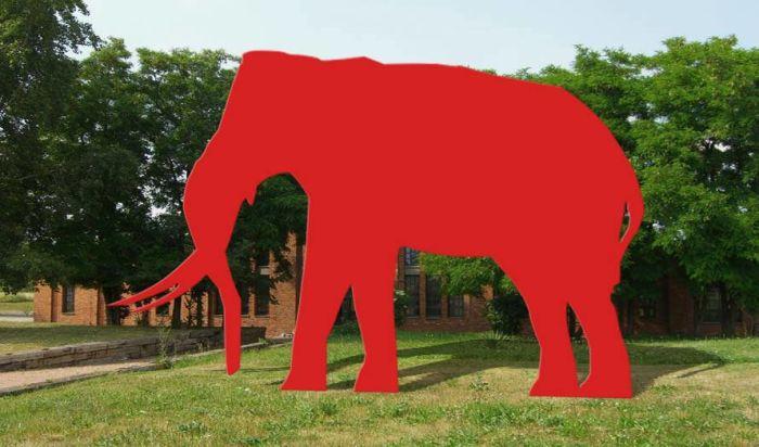 Elefant am Eingang