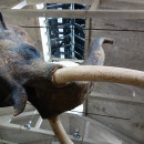 Elefant im  Gehäus