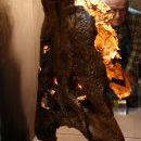 Inszenierung des Asiosuchus-Schädels